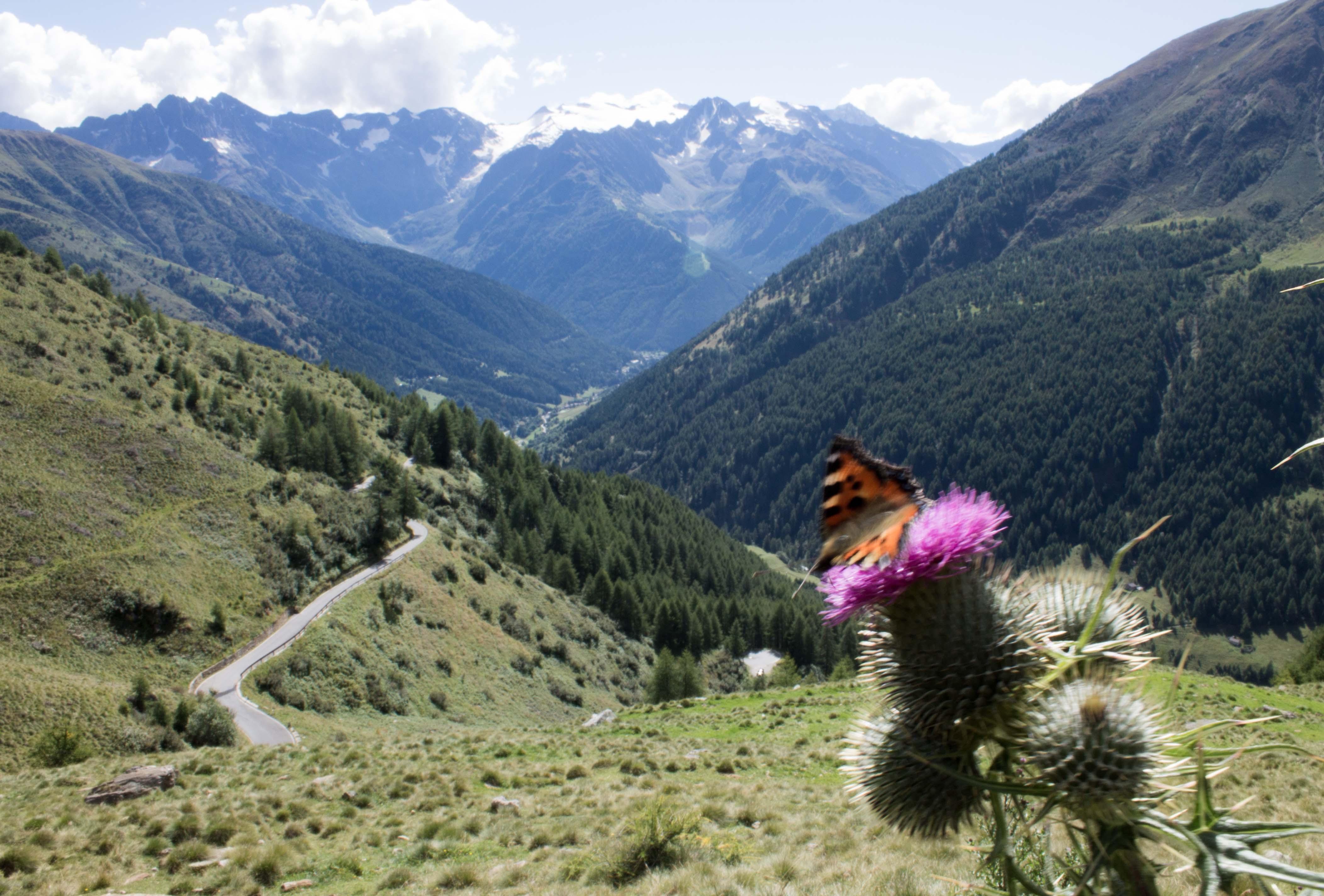 Schmetterling vor Alpen