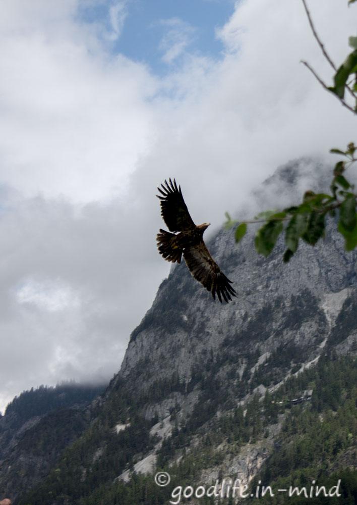 Greifvogelshow-Salzburg