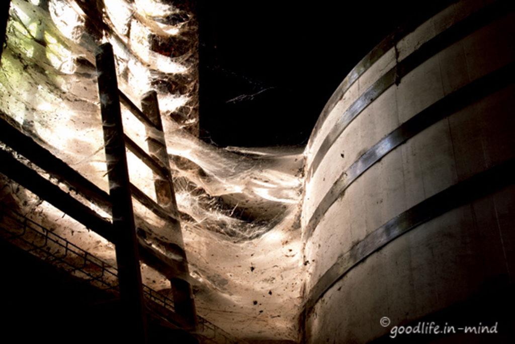 Spider Cognac